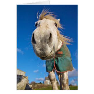 comical picture of a white horse greeting card