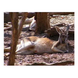 Comida campestre del canguro postal