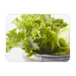 Comida, comida y bebida, verdura, lechuga, imanes de vinilo