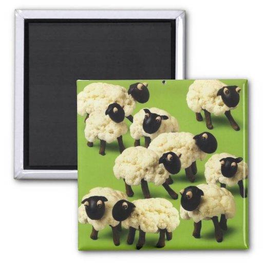 Comida de las ovejas iman de frigorífico