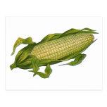 Comida del vintage, verduras sanas, maíz en la postal