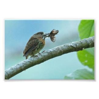 Comida grande para un pequeño pájaro fotografías
