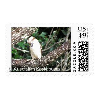 Comida que espera de Kookaburra del australiano Sellos