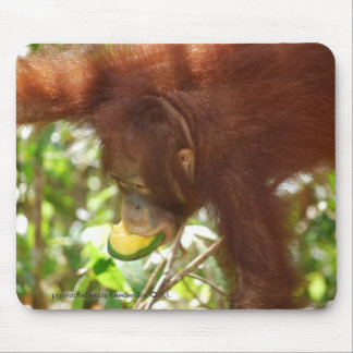 Comidas campestres de la selva tropical del orangu alfombrilla de raton