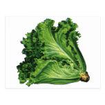 Comidas del vintage, verduras, lechuga de hoja ver tarjeta postal