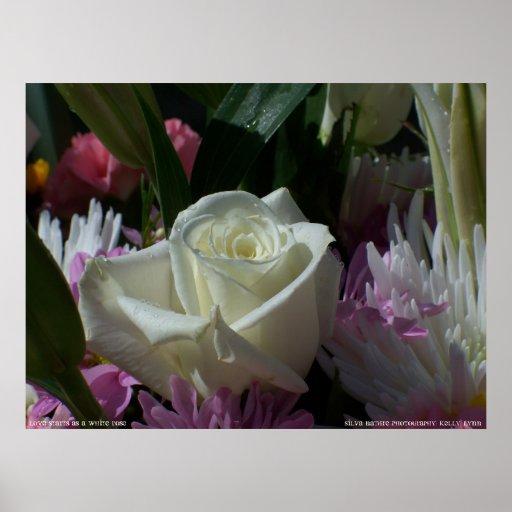 Comienzo del amor como rosa blanco poster