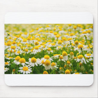 Coming Up Daisies Mouse Pad