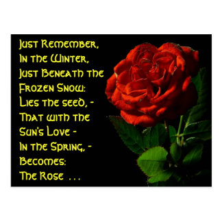 Coming up Roses... Postcard