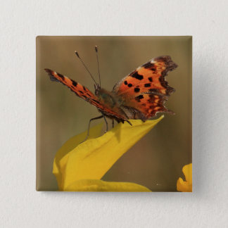 Comma Butterfly and Daffodil Pinback Button