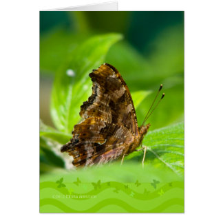Comma Butterfly Card