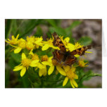 Comma Butterfly in Glacier National Park Card
