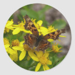 Comma Butterfly in Glacier National Park Classic Round Sticker