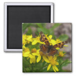 Comma Butterfly in Glacier National Park Magnet