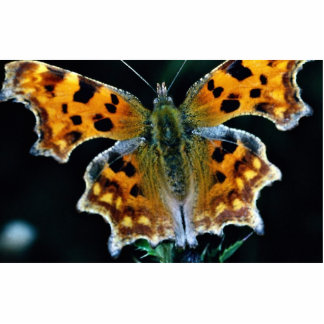 Comma butterfly photo sculptures