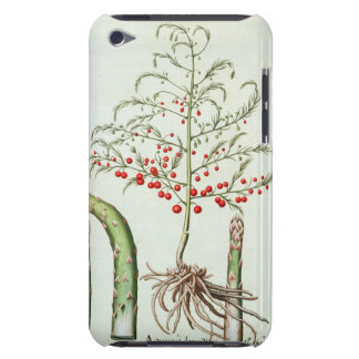 Common asparagus in flower and fruit, from the 'Ho iPod Touch Cover