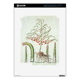 Common asparagus in flower and fruit, from the 'Ho iPad 3 Decal
