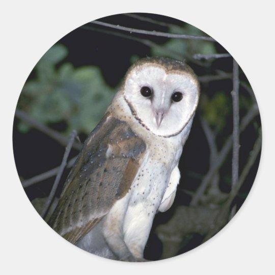 Common barn-owl, Tyto alba, California, U.S.A. Classic Round Sticker