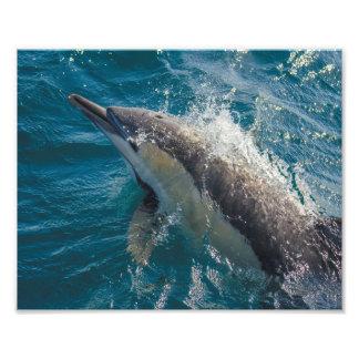 """Common Beauty"" Common Dolphin print - 8x10"" Photo Print"