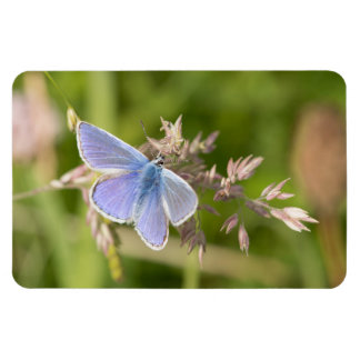 Common Blue Butterfly Magnet