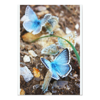 Common Blue Butterfly - Polyommatus icarus on Marj Card