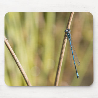 Common Blue Damselfly Mouse Pad
