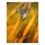 Common Blue Letterhead