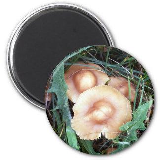 Common Bonnet Mushroom Magnet