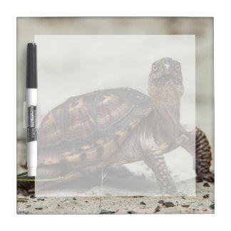 Common box turtle Dry-Erase board