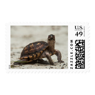 Common box turtle postage stamp