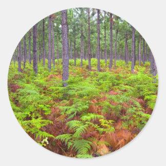 Common Bracken (Pteridium Aquilinum) Growing Classic Round Sticker