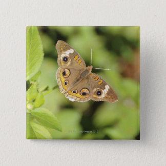 Common buckeye butterfly, Junonia coenia. Button