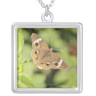Common buckeye butterfly, Junonia coenia. Silver Plated Necklace