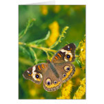 Common Buckeye Butterfly on Goldenrod Greeting Card