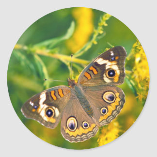 Common Buckeye Butterfly on Goldenrod Classic Round Sticker