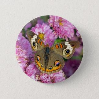 Common Buckeye Butterfly Pinback Button