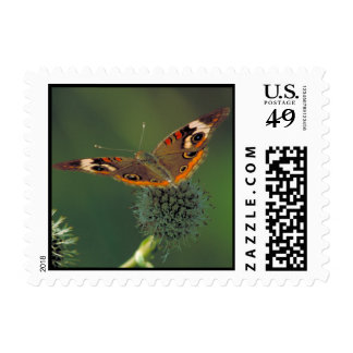 Common Buckeye Butterfly Postage Stamp
