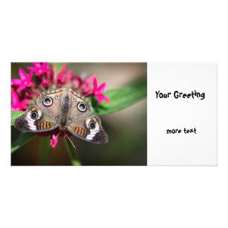 Common Buckeye Junonia Coenia Card
