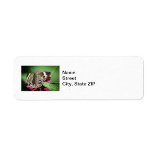 Common Buckeye Junonia Coenia Label