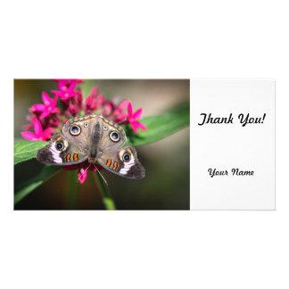 Common Buckeye Junonia Coenia Photo Card