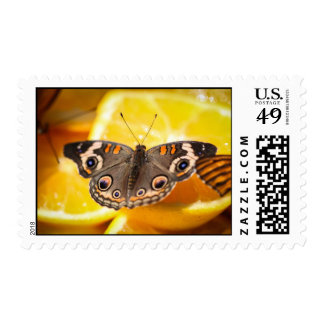 Common Buckeye Junonia Coenia Postage Stamp