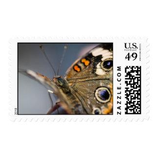 Common Buckeye Junonia Coenia Stamp