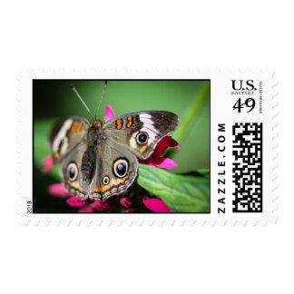 Common Buckeye Junonia Coenia Postage Stamps
