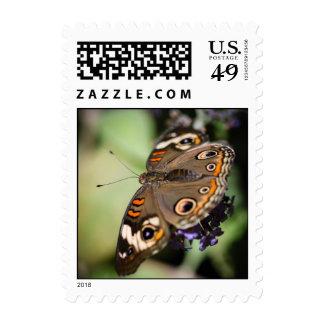 Common Buckeye Junonia Coenia Postage