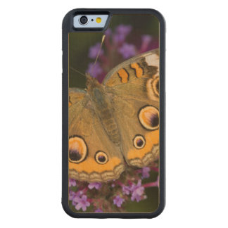 Common Buckeye on Brazilian Verbena Carved Maple iPhone 6 Bumper Case