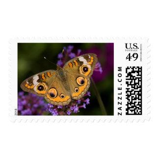 Common Buckeye on Brazilian Verbena Stamp