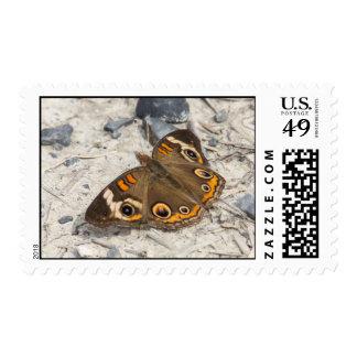 Common Buckeye Postage Stamp