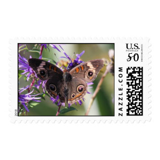 Common Buckeye Postage