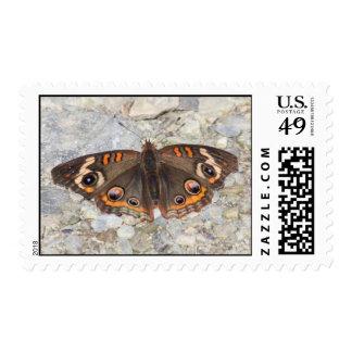 Common Buckeye Stamp