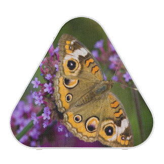 Common Buckeye Speaker