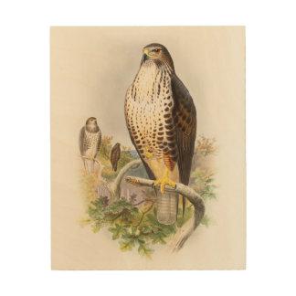Common Buzzard John Gould Birds of Great Britain Wood Print